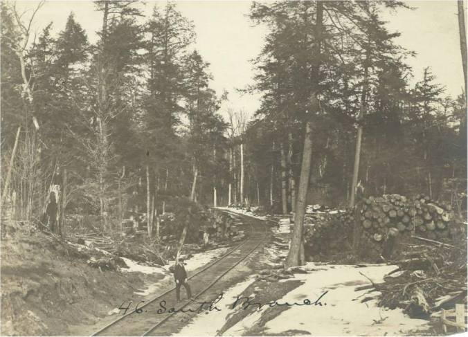 rollway of timber logging railroad